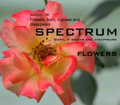 Flowers, born, it grows and disappears